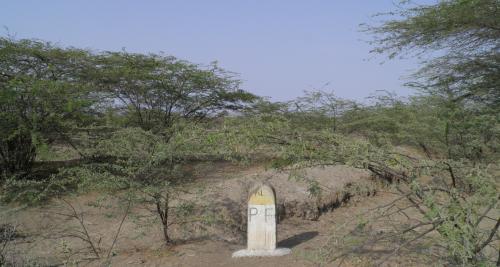 A compensatory afforestation site in Kutch, Gujarat. Photograph by Kanchi Kohli.