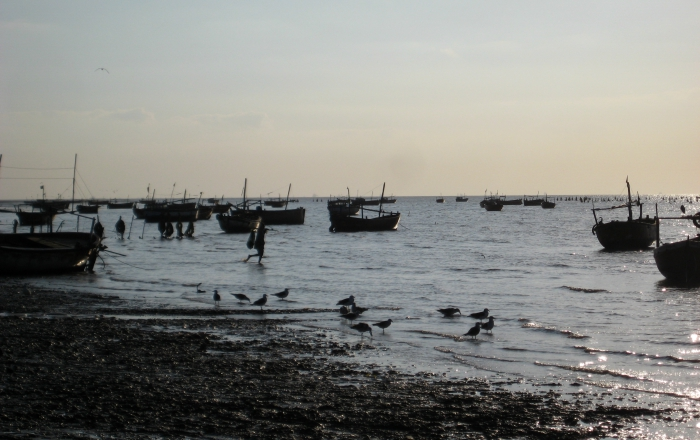 Fishing boats parked in the inter-tidal area at Bavdi Bander. Photograph courtesy Kanchi Kohli.