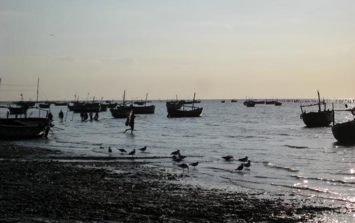 Fishing boats parked in the inter-tidal area at Bavdi Bander. Photograph courtesy Kanchi Kohli.