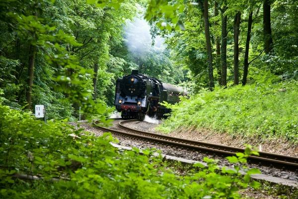 train_jungle