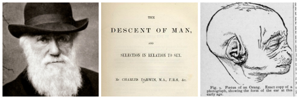 Charles Darwin, the title page of The Descent of Man and Selection In Relation to Sex (1871) and a figure from the book.